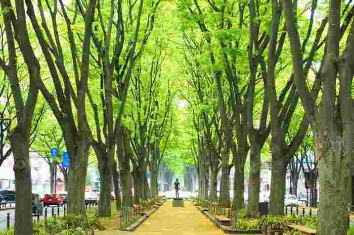 【宮城】東北の中心で伊達な旅♪自然・パワースポット・名物グルメ満喫の観光ガイド