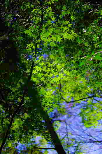 公開は年2回だけ!武蔵野に残る【秘密の森】が11月19日に開放されるよ