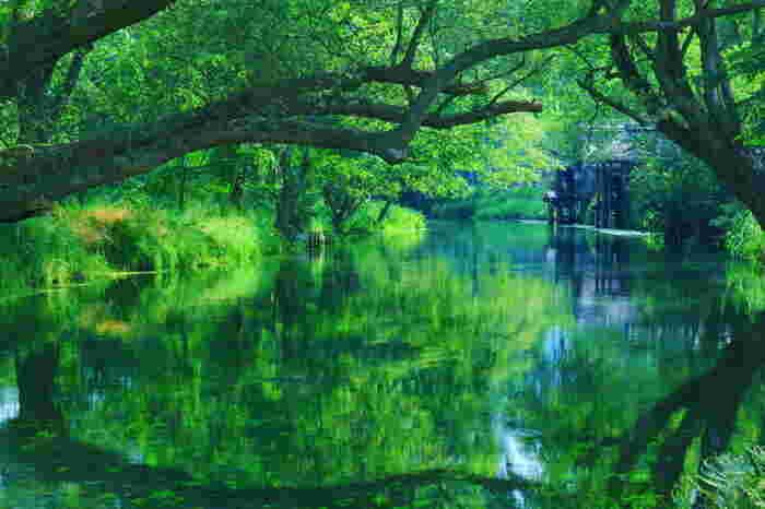 例えばこちらの写真。木々と水面に写る緑が、奥の水車小屋を囲っているように見えますよね。