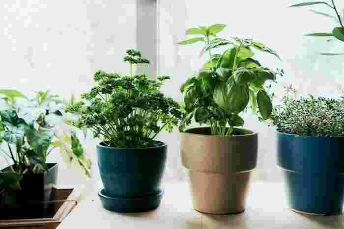 植物が好きな人は、自分でできる範囲で楽しむガーデニングもおすすめです。育てやすい品種を選び、1日10分様子を観察たりお世話をすることで、水やりのタイミングもわかり、上手に育てられるようになっていきますよ。
