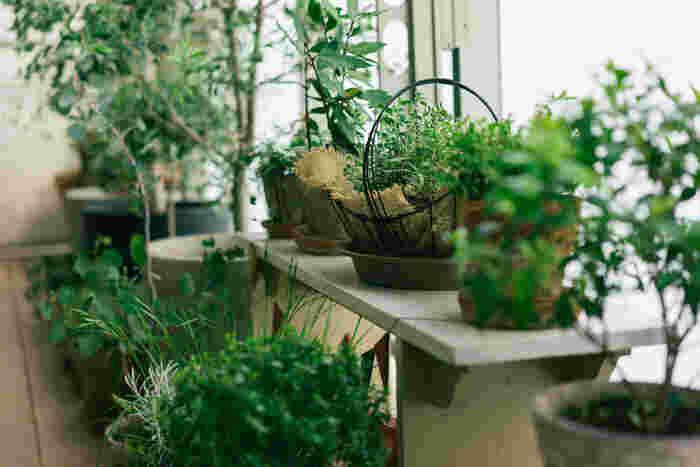 植物だけでなく好きなインテリアや雑貨を思う存分楽しめるベランダが多いのが印象的でした。お家の中にお気に入りの場所があるだけで毎日の生活がもっと心地良く変わります。 ぜひ参考にしてみてくださいね。