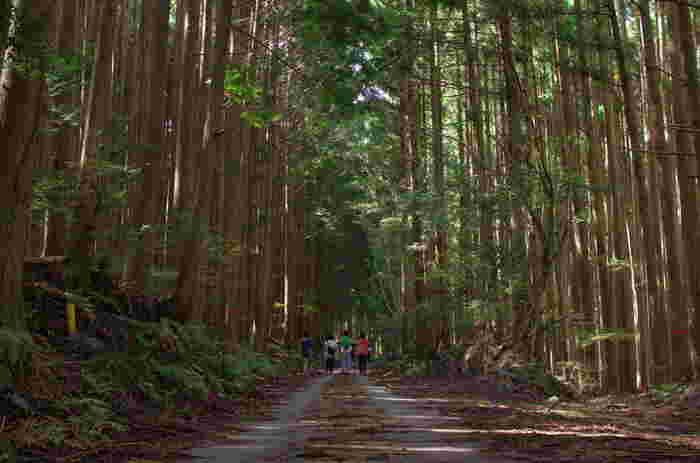 世界遺産になっているものの、まだ訪れていない地も多いのでは?そんな場所を母娘旅で訪れるのもいいですね。写真は、熊野古道。熊野の魅力を知るには、参詣道を実際に歩いてみるのがおすすめです。初心者向けの短時間コースもいろいろありますので、ぜひ。