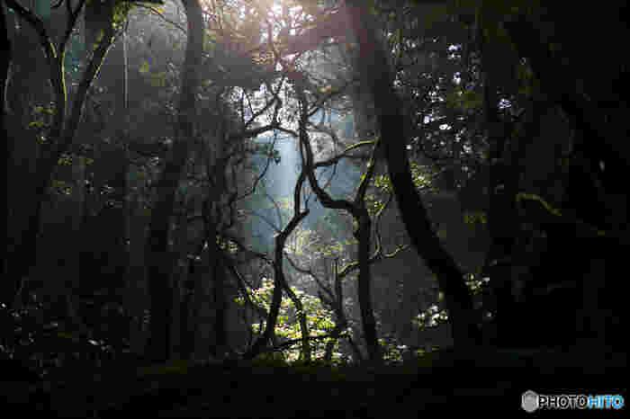 市街地にありながらも豊かな森が広がる地区は全国的にも珍しく、春日山原始林は世界遺産に登録されているほか、国の天然記念物にも指定されています。