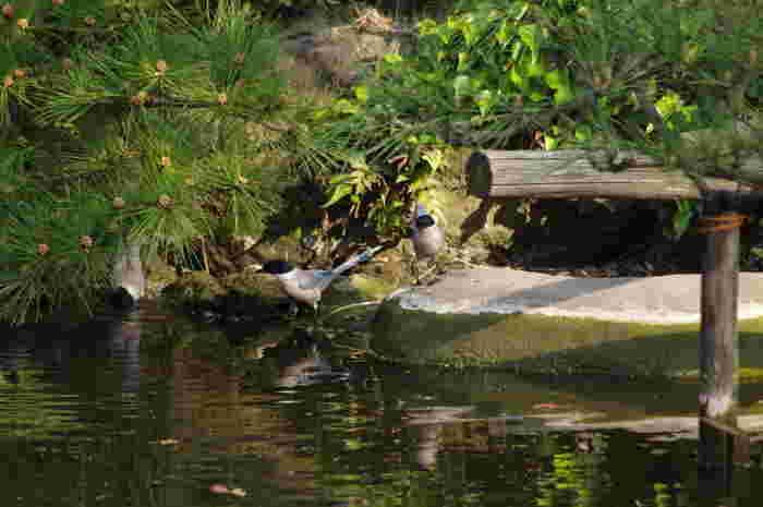 園内の水辺には、アオサギやカモの姿が飛来。遠くまでお出かけしなくても、鳥の姿をゆったり眺めることができます。