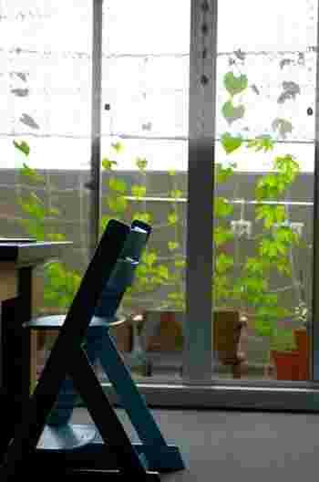 3.(苗から育てる方はここから参考にしてください)つるが伸びる前に、育てる場所に合わせてネットを張ります。ネットの上部は、サッシ枠などのの金具などがあればそこにひもなどで固定すると安定します。ひっかけるところがない場合は、突っ張り棒を外の窓枠の上に着け、そこにネットを吊るという方法もあります。  4.つるが50センチほど伸びたら、ネットにつるをはわせましょう。つるとネットをひもで結んで固定すると、つる同士がからまずキレイにはわせることができます。つるが傷つかないよう、あまり強く縛らないよう気をつけます。
