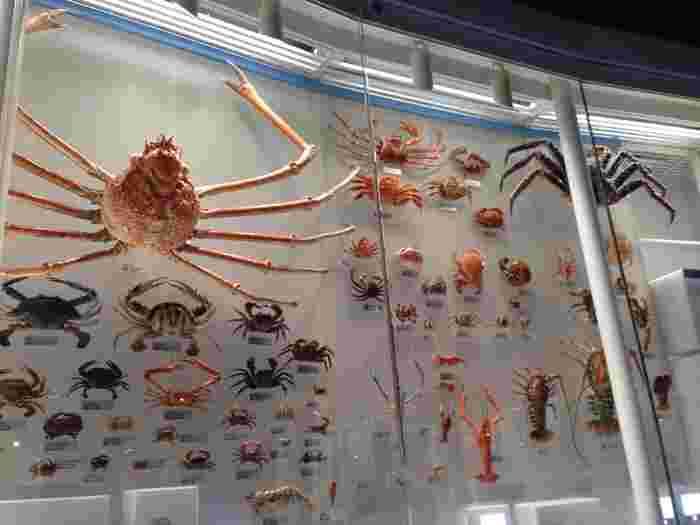 甲殻類や魚類、草花などあらゆるものが精密に再現された展示物に好奇心が刺激されます。