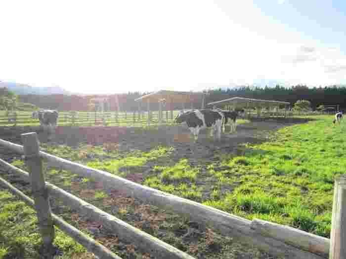 東京駅から電車で1時間ちょっとのところにある栃木県の那須塩原は、日帰り旅にもおすすめの行楽地。山や川に囲まれた自然豊かな場所です。夏目漱石や与謝野晶子などの文豪も愛した土地としても知られています。こちらの「那須千本松牧場」は、東京ドーム178個分の広大な広さで、乗馬やサイクリングなど1日中楽しめるスポットです。