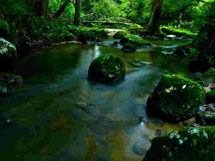 鶏鳴の滝周辺には豊かな自然が広がっています。心地よい清流のせせらぎに耳を澄ませながら、緑いっぱいの森で森林浴を楽しむのもおすすめです。