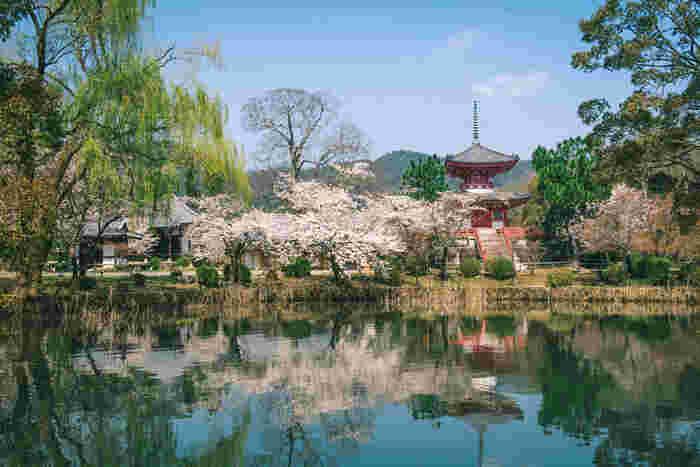 大覚寺境内の東側に位置する大沢池の周囲には、ソメイヨシノや山桜が競う様に咲き誇ります。朱色をした多宝塔、満開の桜の樹々、静かな水面をした大沢池が織りなす景色は、まるで日本画のような素晴らしさです。
