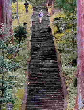 見上げてしまうほどの階段ですが、のぼったらきっと清々しい気持ちがするでしょう。