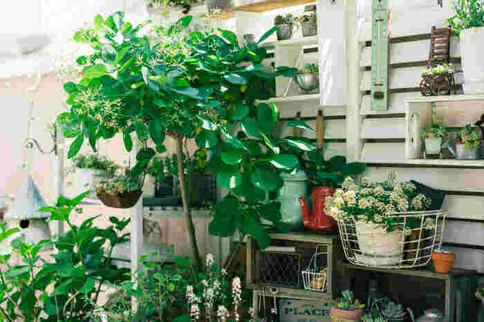 狭いスペースの場合は、背の高いフェンスなどを設置して植物や雑貨を吊るすのがおすすめです。背の高い木もあると、庭らしさが出てさらに素敵に。