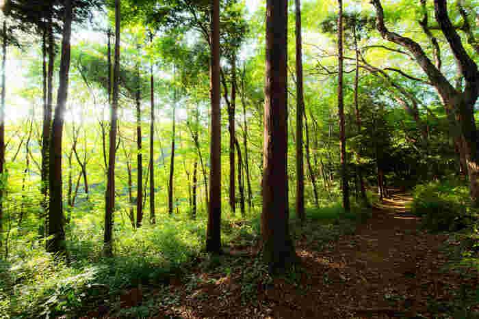 木漏れ日が差し込む森は、都心から近い場所とは思えないほど自然が豊かです。雑木林の小道は、メイがトトロに出会った場所のよう。
