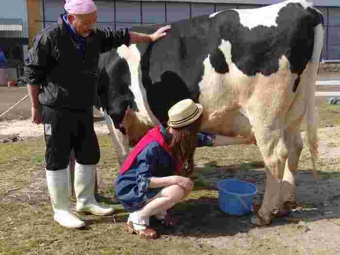 山田牧場では、動物たちとのふれあいを楽しむだけでなく、乳搾りなどの農業体験をすることができます。