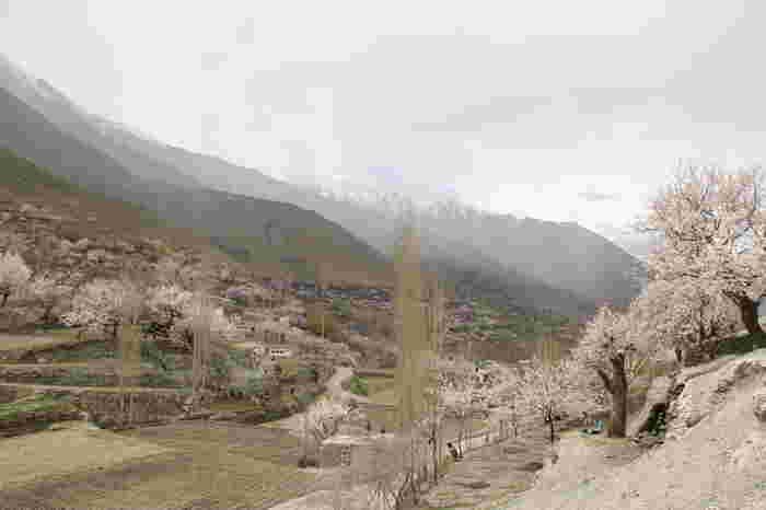 夏でも冠雪した猛々しいカラコルム山脈、山と生きる人々が暮らす美しい農村、淡い桃色の花を咲かせる樹々が見事に調和したフンザ渓谷は、「桃源郷」とも呼ばれています。