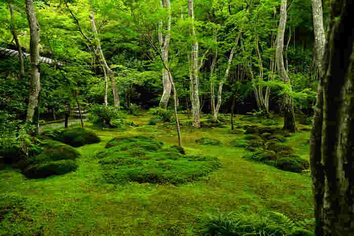 祇王寺では樹々の緑だけでなく、苔庭の美しさも格別です。深緑の葉をつけた樹々に囲まれながら美しい苔庭庭園を眺めていると、身も心もきれいになってくるような不思議な感覚を味わうことができます。