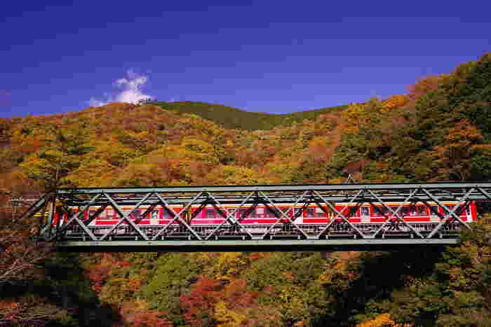 塔ノ沢駅~大平台駅間にある鉄橋「早川橋梁」は、紅葉の絶景ポイントのひとつ。「出山の鉄橋(でやまのてっきょう)」という別名でも親しまれています。渓谷に掛けられた鉄橋なので、列車の車窓から箱根の山々の紅葉をパノラマで楽しむことができますよ♪  紅葉のシーズン限定で、「鉄橋の上で一旦停車」してくれる嬉しいサービスも・・・! 数秒間の停車ですが、その美しさをカメラに収めたり、心のシャッターを切って記憶にとどめたりできる、最高の瞬間になるでしょう。