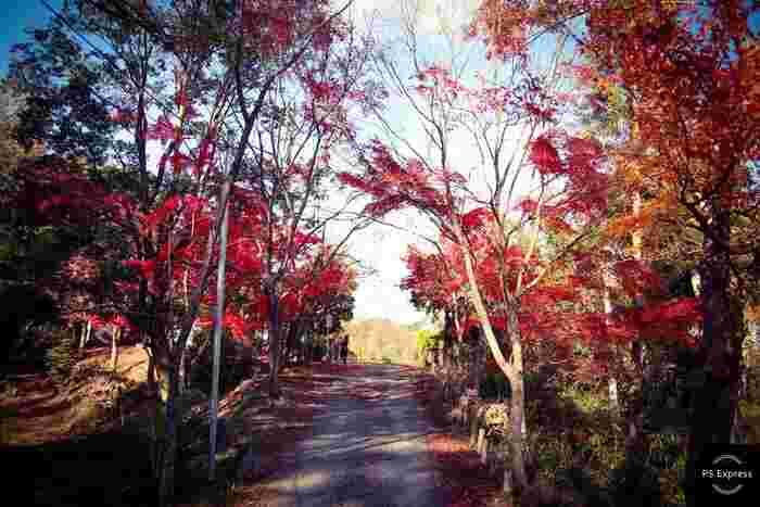 北大阪随一の景勝地として知られている摂津峡は、大阪府と京都府の境界に位置する高槻市内をとうとうと流れる芥川沿いに広がる渓谷で、大阪府の名勝に指定されています。