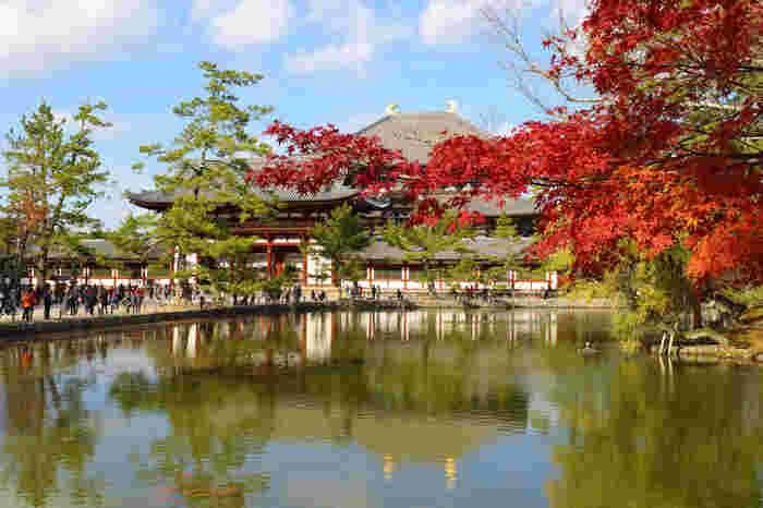"""東大寺の敷地内にも、紅葉の見どころスポットがいろいろあります。こちらは「鏡池」。奥に見えるのが大仏殿です。ほかにも大仏殿の北西にある「大仏池」や、三月の伝統行事""""お水取り""""で知られる「二月堂」、東大寺を守護する「手向山八幡宮」なども穴場スポットですので、ぜひゆっくりと散策してみて下さい。"""