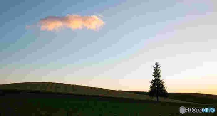 上部の枝振りが星の形のように見えることからいつしか「クリスマスツリーの木」と呼ばれるようになった、広々とした畑に佇むトウヒの木。