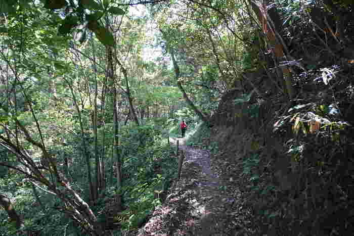 生駒山麓から山全体には豊かな森が広がっており、また、よく整備されたハイキングコースも敷かれているため、登山初心者でも気軽にアクセスができる森林浴スポットとして人気があります。