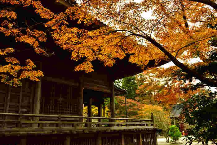 木の無垢で造形された本堂の周囲は、回廊となっていて靴のままで建物や秋を楽しむことができます。入館料や駐車料金が無料なのは嬉しいですね。