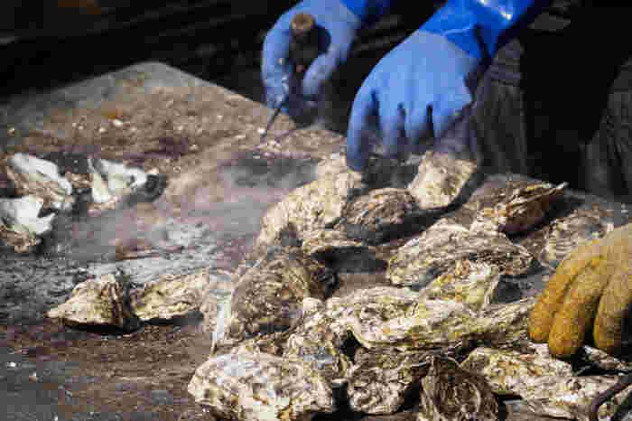 """広島に次ぐ牡蠣(マガキ)の産地、宮城。松島・石巻・気仙沼が有名です。宮城では、牡蠣が思う存分食べられる""""牡蠣小屋""""が盛んで、殻付き牡蠣を鉄板や網で豪快に焼いて楽しみます。三陸は外洋に向かっているので海水がきれいで生食用の牡蠣にも向いているとか。"""