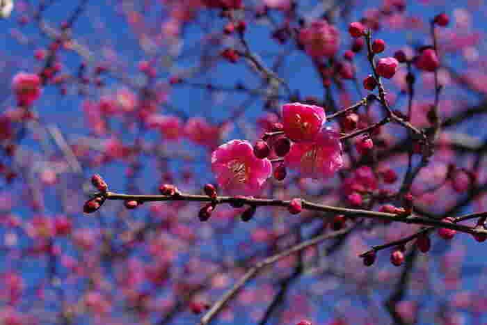 寒さの中で凛と咲く「冬の花」に出合える都内の公園&名所へ出かけよう*