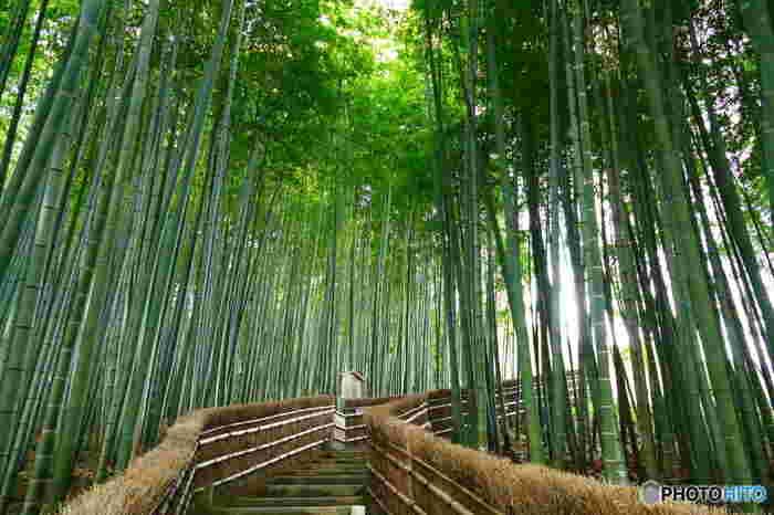 化野念仏寺の境内奥地には、竹林の小径があります。天を仰ぐほどに伸びた青竹の隙間から差し込む木漏れ日を浴び、心地よく耳に響く葉摺れ音を聞きながら小径を歩いてみるのもおすすめです。
