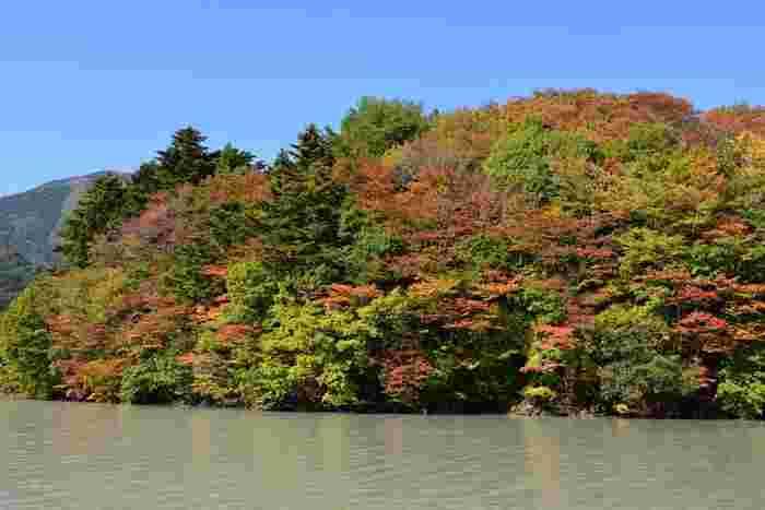 約1時間半程度の遊歩道散策を終えたら、井川本町渡船場から井川ダム渡船場を結ぶ遊覧線に乗って井川ダムへの玄関口、井川駅まで戻ることができます。遊覧船からは、豊かな自然に囲まれた井川湖周辺の雄大な景色を臨むことができます。