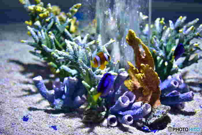 グレートバリアリーフを再現した展示ゾーンでは、色とりどりのサンゴ中で美しい熱帯魚たちが泳ぎ回っています。