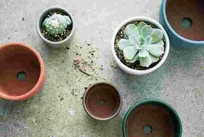 サボテンはできれば1年に1回植え替えをします。植え替えの時期は春または秋で、サボテン用の土に肥料を一緒に混ぜ込みます。鉢は大きすぎると根腐れを起こしやすくなるので、今までの鉢より一回り大きい鉢にしましょう。