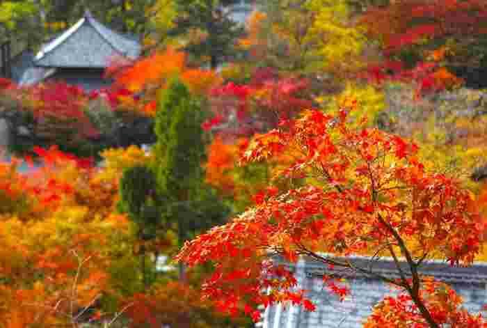 「永観堂」は、南禅寺同様、寺域が広く、若王子山を背にした境内には、釈迦堂や御影堂、本堂の阿弥陀堂といった伽藍が建ち並んでいます。【11月中旬の境内。画像は「多宝塔」からの眺め。】