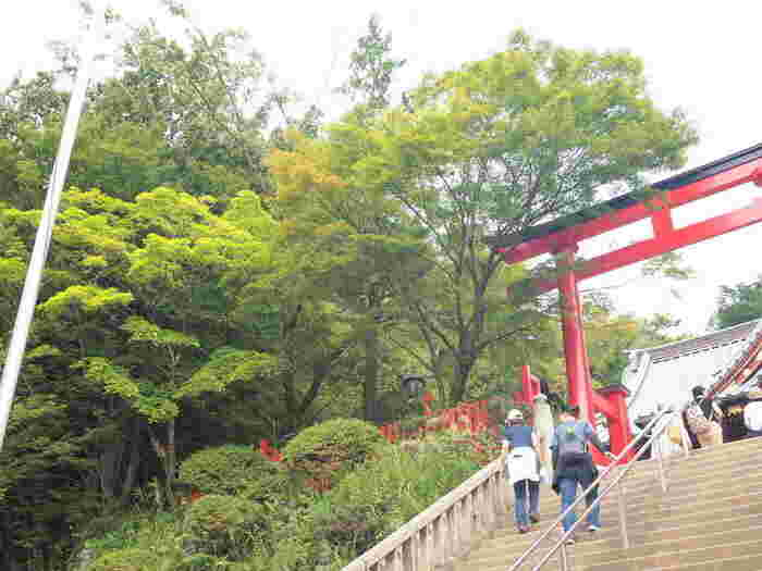 高尾山はその美しさと、日帰りでもゆっくり楽しめることから大人気の観光地。山登りをしたり、野草や野鳥を観察したり、山々に癒されたり、それぞれのスタイルで楽しめます。