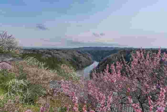 渓谷中心部を悠然と流れる名張川、紅白に花を咲かせる梅の樹々花、長い年月をかけて造られた渓谷美が織りなし、月ヶ瀬梅渓では一枚の絵画のような景色が広がります。