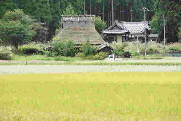 稲作の後に出る藁は、昔から色々な道具の材料として農家の方に重宝されてきました。縄を綯ったり、ムシロを編んだり……神社のしめ縄なんかもそうですね。昔は生活の中の色んなものを藁で作っていたんです。