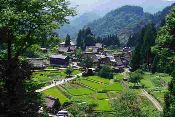 山は深緑となり、田んぼが青々と輝く季節。《相倉集落》の夏。