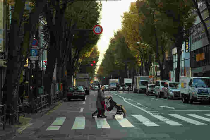 杉並区はその名前の通り緑被率が高い地域で、南阿佐ヶ谷駅前の中杉通りにはケヤキ並木があったり、桜の名所である善福寺川緑地があったりと、身近に自然を感じることができます。阿佐ヶ谷から南阿佐ヶ谷の間にある阿佐ヶ谷パール商店街も活気があり、買い物に便利。交通は阿佐ヶ谷駅から中央線、南阿佐ヶ谷駅から東京メトロ丸ノ内線と実質2路線が使えるので、都心にアクセスしやすい環境です。