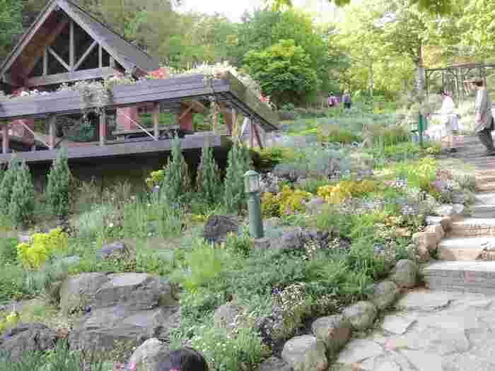 まずは、神戸布引ハーブ園へ。12のガーデンには約200種の花やハーブが咲いており、その色や香りを季節ごとに楽しむことができます。ハーブガイドツアーなどの体験プログラムも用意されているので、お出かけ前にチェックしてみてくださいね。