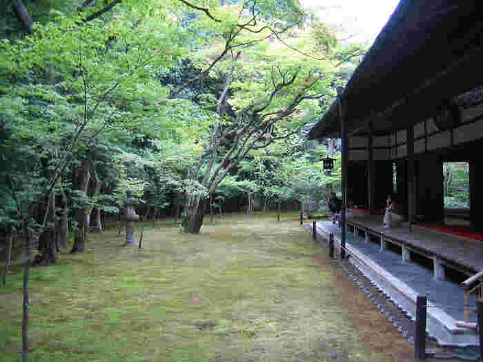 【大徳寺塔頭「高桐院」の客殿前に広がる『楓の庭』】