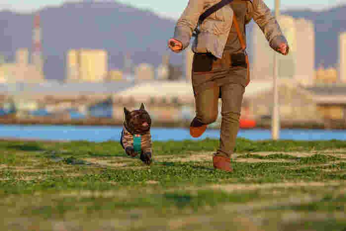 いつもとは違う週末を伊豆で愛犬と一緒に過ごしてみませんか?とくに、春や初夏の時期は、山の緑が青々としていてドライブにももってこいのシーズンです。愛犬と自然豊かな伊豆で食べて、遊んで、ステキな思い出をたくさん作ってくださいね♪