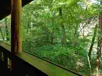 木々に囲まれたお店なので、大きな窓からの眺めはまるで森の中にいるよう。