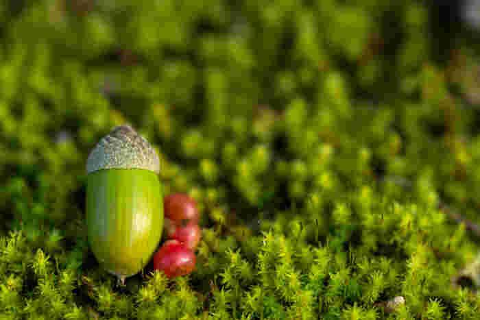 どんぐり拾いや落ち葉拾い、紅葉狩りで、木の実や紅葉した葉っぱを集めて飾ると、秋の訪れを感じます。