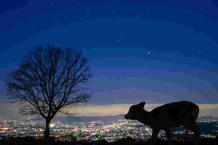 陽が落ちて空に星が見える頃、そこにはまだ見たことのない奈良の景色が隠れているかも…。 歴史の風情漂う夜の古都を、改めてゆっくり歩いてみませんか?