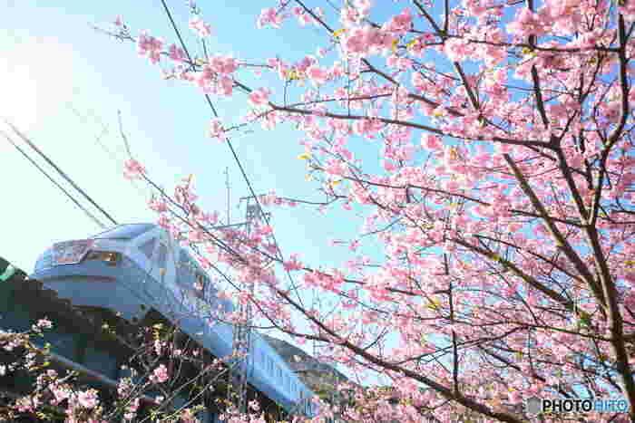いかがでしたでしょうか。東京から新幹線で3時間ほどという、好アクセスも魅力的な「伊豆」エリア。関東にお住まいの方は思い立ったが吉日、次の週末にでも温泉旅行へ出かけてみてはいかがでしょう♪
