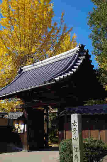 祖父江町にある「祐専寺(ゆうせんじ)」には、樹齢推定250年の古木があり、稲沢市の天然記念物に指定されています。一見の価値がありますね。