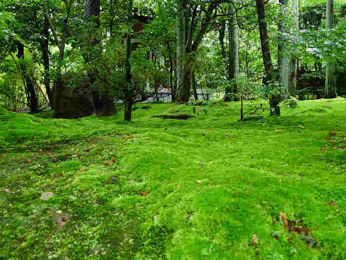 境内の庭園には苔が絨毯のように生え、木々の緑と相まって目を奪われます。