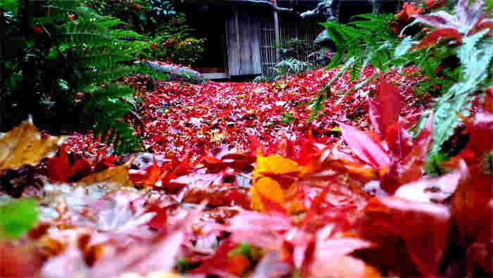 「厭離庵」は、通常事前予約が必要ですが、紅葉が色付く11月から12月初旬までは、一般公開しています。