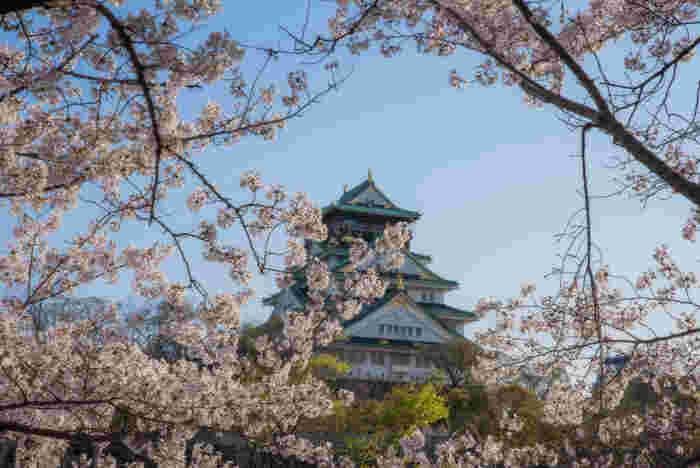 「日本さくら名所100選」に選定されている大阪城公園は、戦国時代に活躍した武将、豊臣秀吉が築城した大阪城跡を整備した都市公園です。公園内にはソメイヨシノを中心に約300本の桜が植樹されており、大阪の春に彩りを与えています。