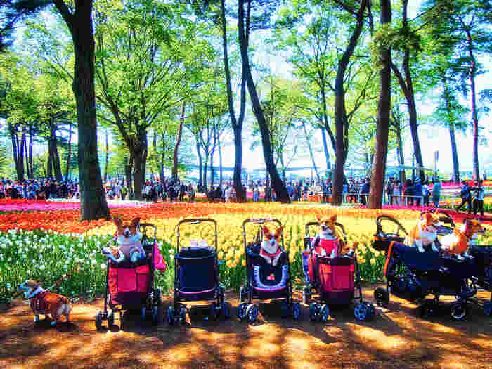 四季折々の花々が楽しめるひたち海浜公園に、ワンちゃん仲間さんと一緒にお出かけしてみてはいかがですか?ひたち海浜公園ICからすぐとアクセスも便利です。