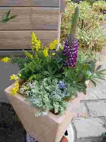 背の高い植物をうしろにして、低いものを前に。高低差をつけると、立体感のある寄せ植えになります。また、横に伸びるものや、下に垂れるのもなどを合わせると、寄せ植えに動きが生まれ、個性的なデザインが楽しめます。